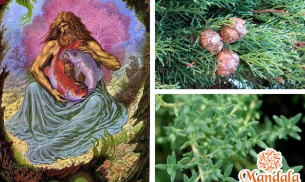 Transitamos el Signo de Piscis, sus aromas: Ciprés y Tomillo