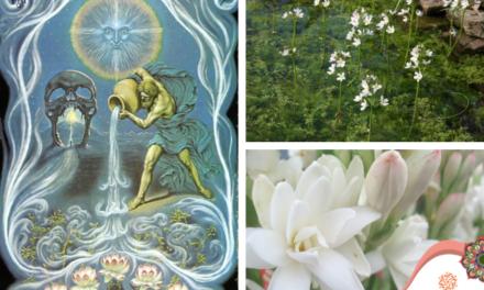 Acuario: El signo del aguador, que vierte sabiduría
