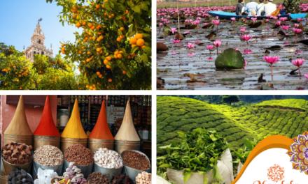 Los aromas, una forma de viajar
