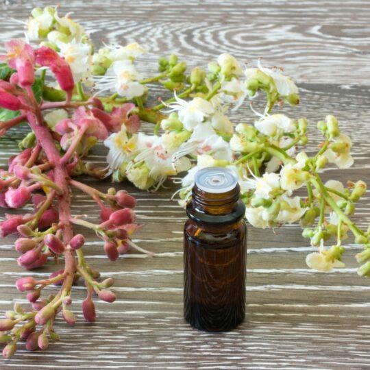 Formación como Terapeuta Floral